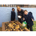Planting Daffs with Ms Brock