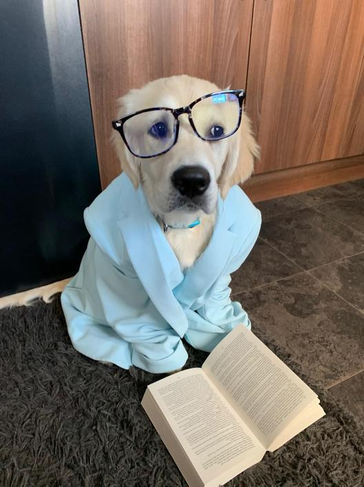 Luna, Ms Jarman's puppy, is ready for World Book Day, are you?