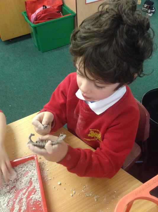 Putting the dinosaur fossils together.