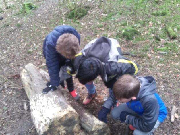 Looking minibeasts during our ecotrail.
