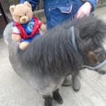 Having a pony ride at Stockley Farm Park