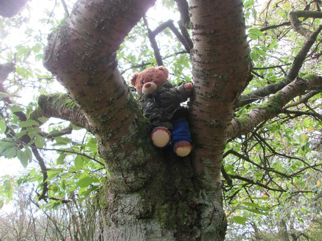 Climbing trees in the park.