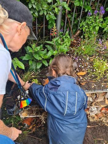 Planting around our Bug Hotel