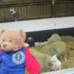 Bradley enjoyed looking at the lambs at the farm