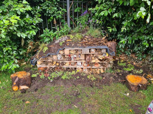 Our Bug Hotel is starting to burst into flower.