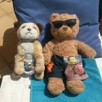 Bradley & Oodles having a little sleep in the sun