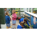 Reception class has been growing strawberries.