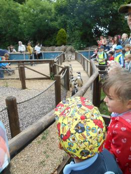 Twycross Zoo - Year 2 - Linked to the theme - Wild in Africa - June 2015 4