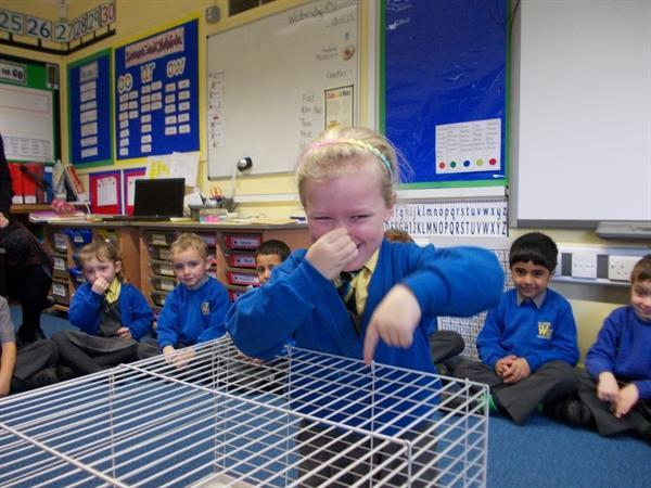 The guinea pigs' cage needed cleaning!