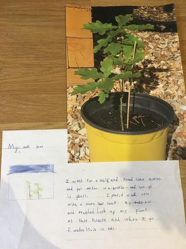 Charlie's plant