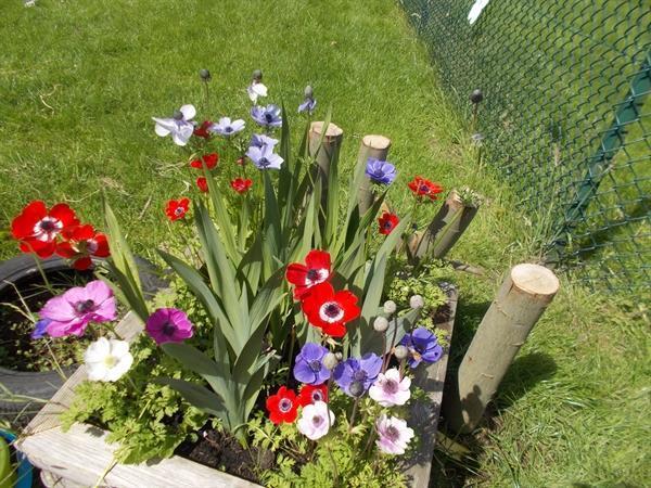Garden maintenance!