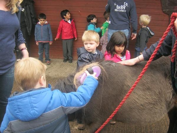 We all helped to groom Duncan the pony!