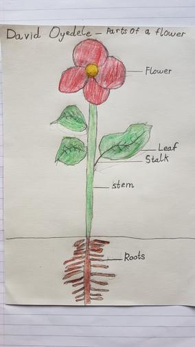 David's plant labelling