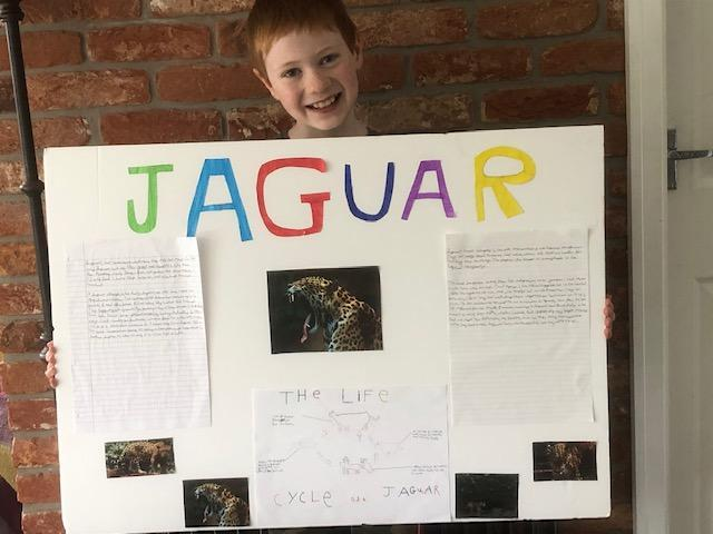 Jaguars by Andrew