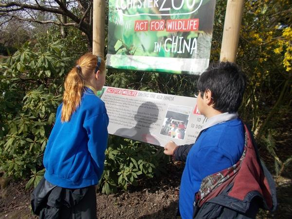 We found out about the red panda.