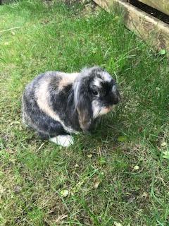 This is Bertie