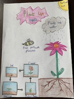 The Life Cycle of a Flowering Plant by Jacob