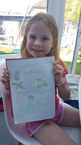 Maisie's plants work