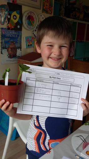 Bob's growing a beanstalk!