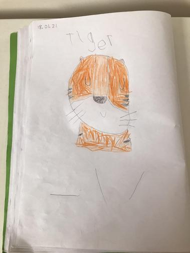 We looked at the shapes that make up a tiger's face