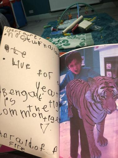 We made our own book on tigers