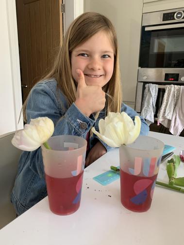 Sophie's plant experiment