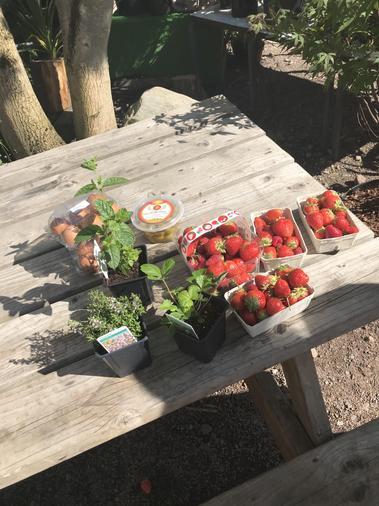 Alisha's strawberries - delicious!