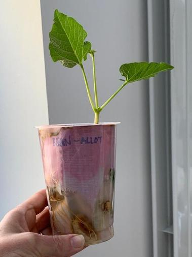 Sophie's plant