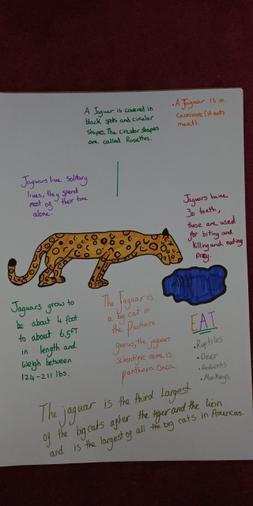 Jaguars by Jess R