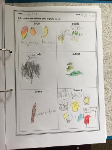 Sameer's work on plants we eat
