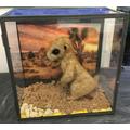 Yr 1 - Curiosity Cube (Meerkat Mail)