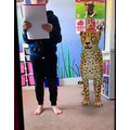A leopard came to visit