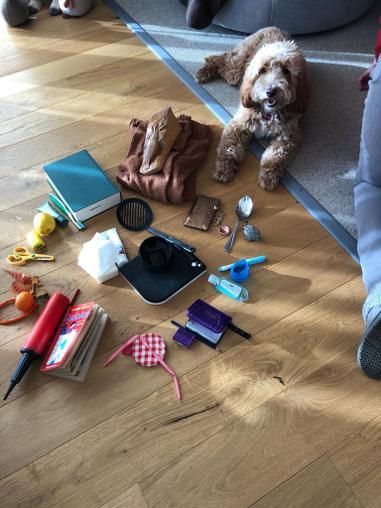Harry's colour wheel plus his dog!!