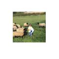 Busy feeding the flock.
