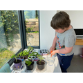 Jo getting started with his planting
