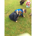 Comparing  mini beasts in long and short grass.