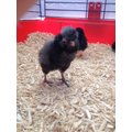 Chick 3 - check out his ELVIS hair!