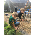 Oscar & his brother have been busy planting beans.