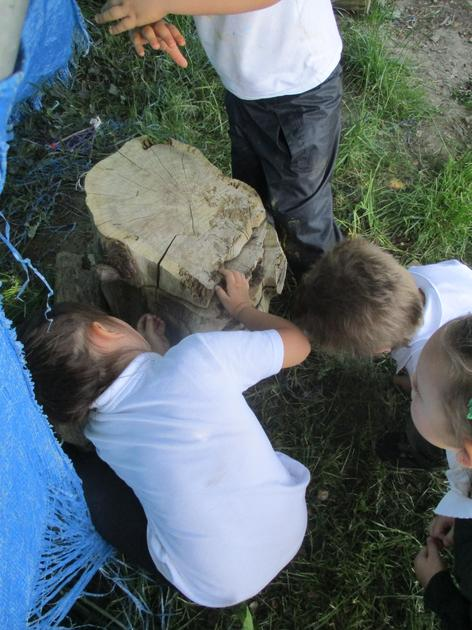 Looking for minibeasts.