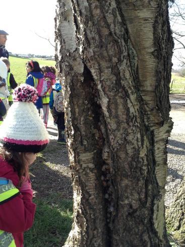 The Snail Tree