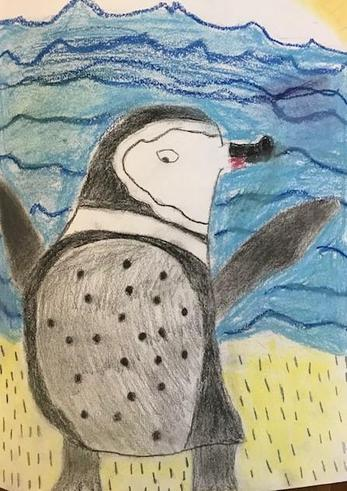 Galapagos Penguin by Charlotte (using oil pastels)
