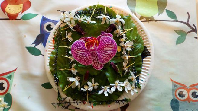 Adam's flower saucer