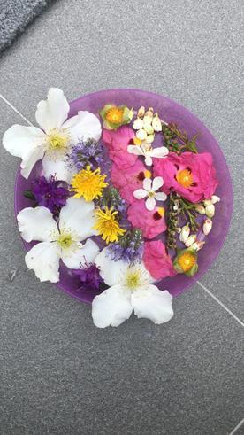 Hayden's flower saucer close up