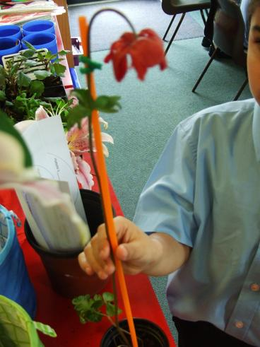 We have been learning about different plants