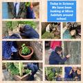 Science - Exploring microhabitats around the school grounds