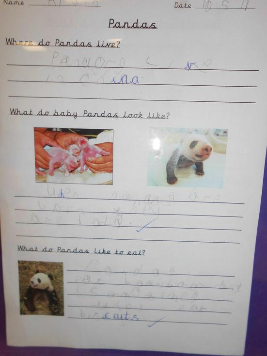 Aiden worked on his own to write about pandas. He has used full stops and capital letters and tried very hard to form all his letters correctly – well done Aiden!
