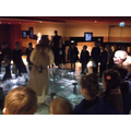 Jorvik Trip 34SB 2015 (3).JPG