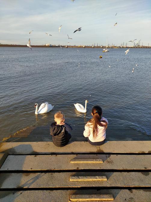 Feeding the swans!