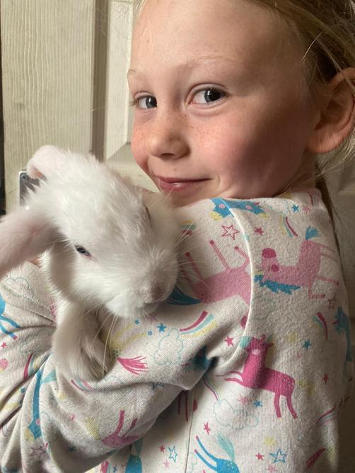 Rabbit called Daisy