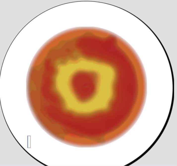 Sara's spirals